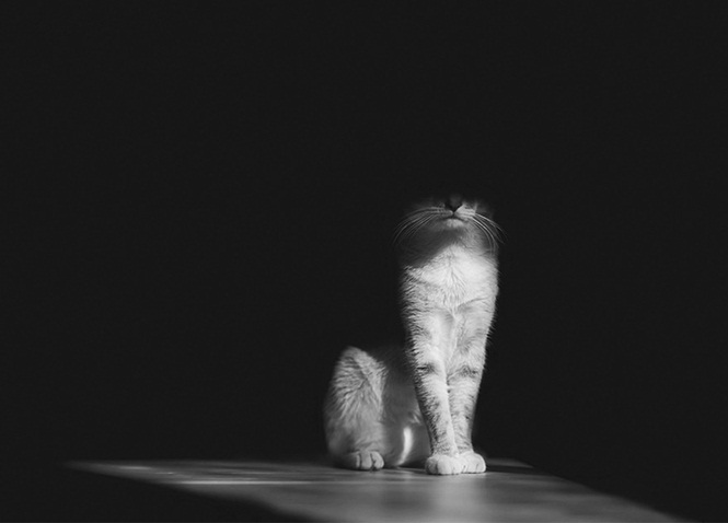1473183775_453_A-misteriosa-vida-dos-gatos-capturada-em-preto-e-branco